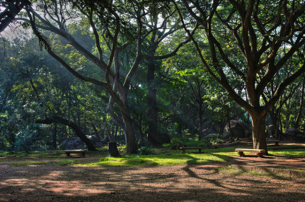 Things to do in Bangalore- Nature Walks